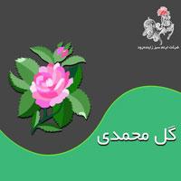 با مسائل کشت و کار گل محمدی بیشتر آشنا شوید