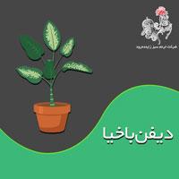 با مسائل پرورش و نگهداری گیاه دیفن باخیا بیشتر آشنا شوید