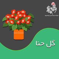 با مسائل پرورش و نگهداری گل حنا بیشتر آشنا شوید