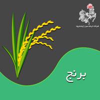 با مسائل کشت و کار برنج بیشتر آشنا شوید