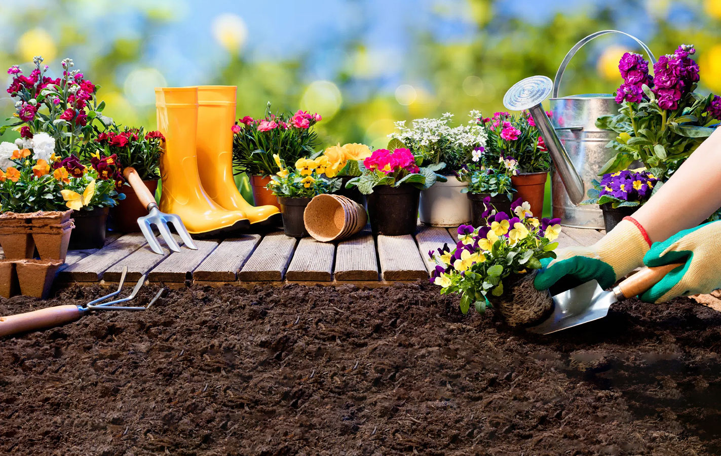 پرورش گل و گیاه خانگی
